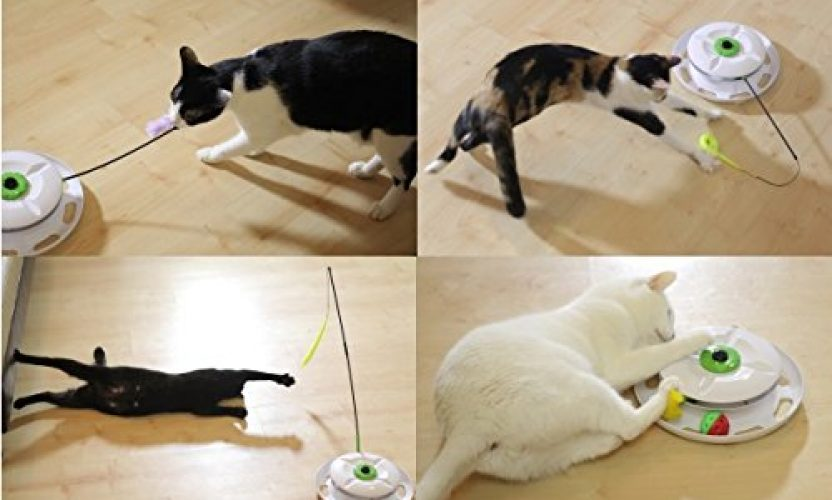 Review: WANTi Interactive Cat Toy