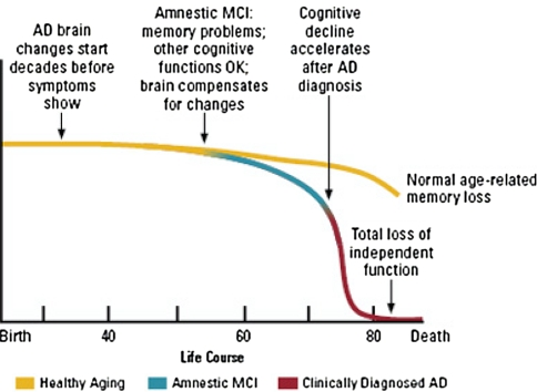 Brain and cognitive function as we age. Source: Venngage.com